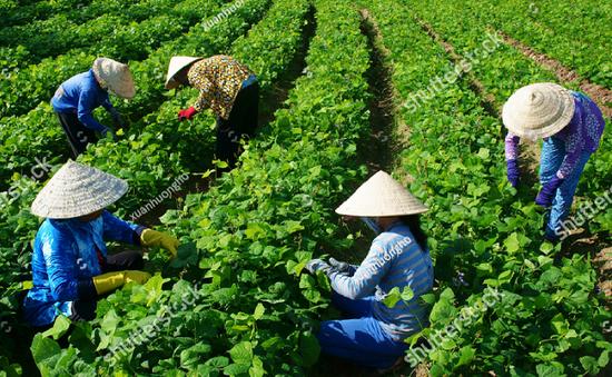 Nông nghiệp Việt Nam thắng lớn trong năm 2017