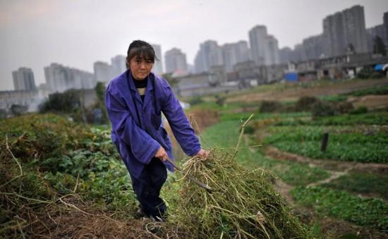 Trung Quốc tập trung phát triển nông thôn