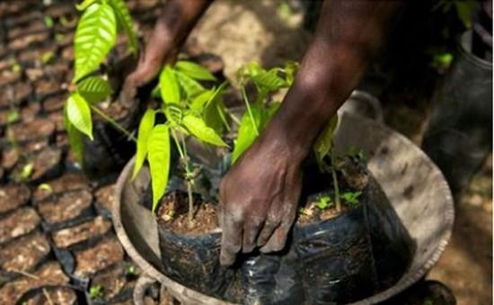 FAO: Nông nghiệp có thể khống chế hiệu ứng nhà kính chỉ trong vài năm