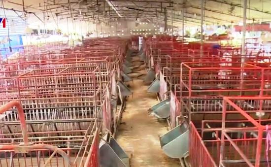 Thủ phủ chăn nuôi lợn tại Đồng Nai trên bờ vực phá sản