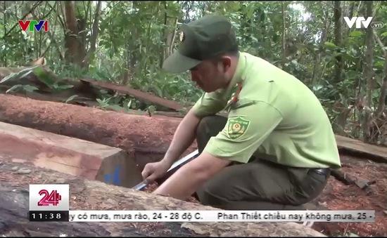 """Đăk Lăk: Những hình ảnh """"đại công trường"""" khai thác gỗ phá rừng đầu nguồn quy mô lớn"""