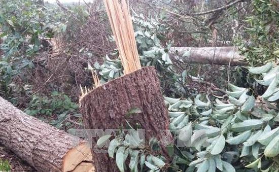 Kỷ luật hai cán bộ kiểm lâm để xảy ra phá rừng nguyên sinh ở Trường Xuân, Đắk Nông
