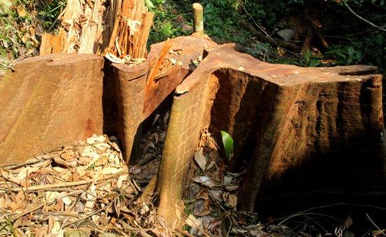 Chống chặt phá rừng: Cuộc chiến chưa bao giờ hết nóng