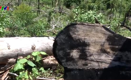 Phát hiện vụ phá rừng quy mô lớn ở Quảng Nam