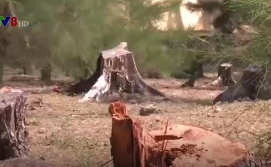Phát hiện vụ phá rừng quy mô lớn ở Quảng Trị