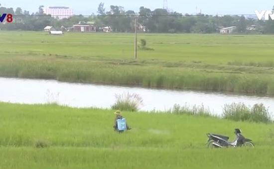 Quảng Trị: Nhiều người dân sử dụng thuốc BVTV không đúng quy định