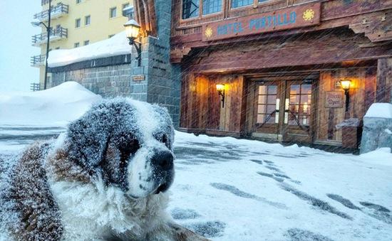 Thời tiết giá lạnh, tuyết rơi dày tại Nam Mỹ