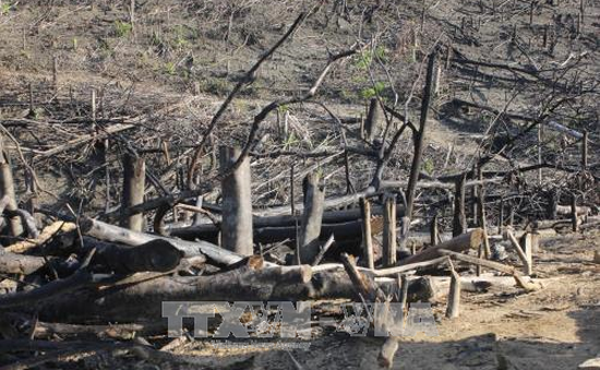 Khởi tố vụ án hủy hoại rừng tại huyện Hoài Ân, Bình Định