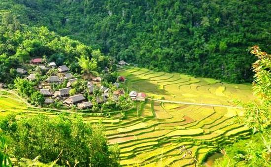 Khám phá mùa vàng tuyệt đẹp ở Pù Luông, Thanh Hóa