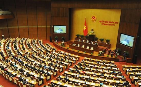 Hôm nay, Quốc hội biểu quyết thông qua Luật Bảo vệ và phát triển rừng (sửa đổi)