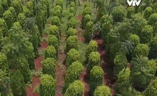 Phát triển rau hữu cơ Nhật Bản tại Đăk Lăk