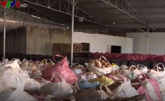 Nhập nhèm rau Trung Quốc, rau Đà Lạt