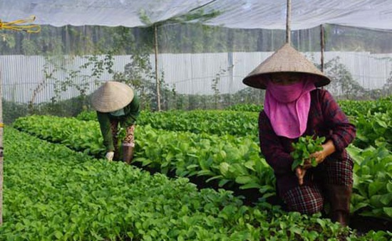 Còn nhiều tiềm năng phát triển nông nghiệp hữu cơ Việt Nam