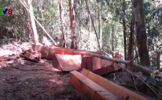 Đăk Nông: Bắt khẩn cấp đối tượng chuyên bảo kê phá rừng