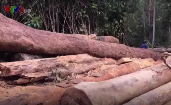 """Nhiều diện tích rừng bị """"đầu độc"""" không thương tiếc"""