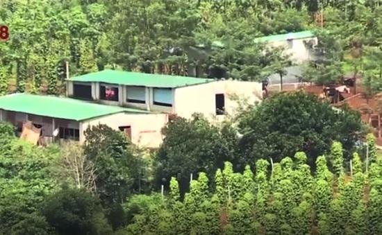 Đăk Nông: Cấp giấy chứng nhận quyền sử dụng đất cho 2.400ha rừng