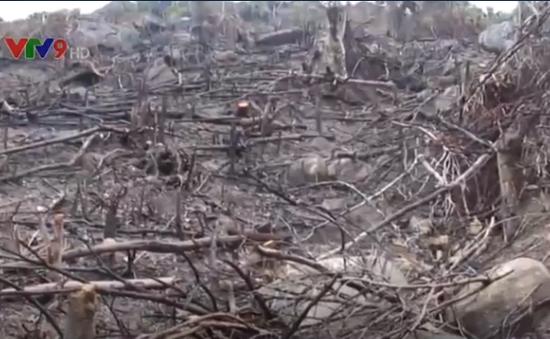 """Bình Định: Phát hiện hàng chục ha rừng phòng hộ bị """"cạo trọc"""""""