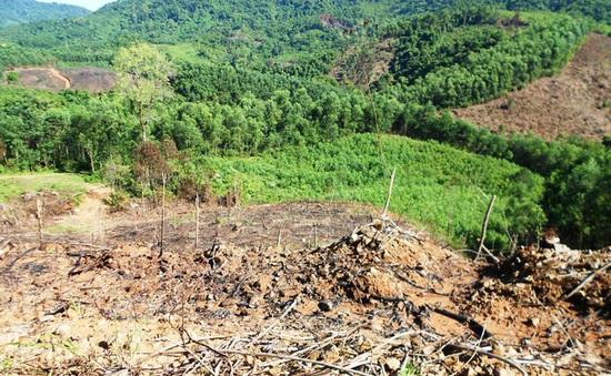 Bắt 2 đối tượng liên quan đến vụ phá rừng An Lão, Bình Định