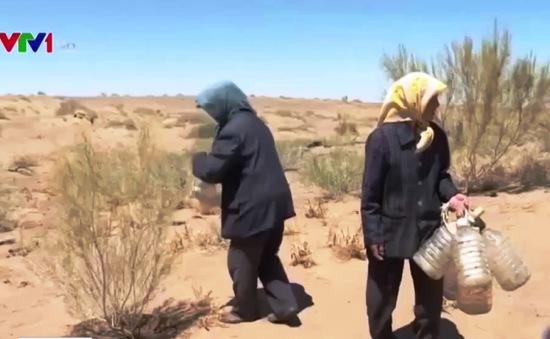 Trồng 50.000 cây để biến sa mạc thành ốc đảo