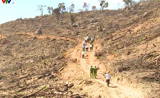 Bình Định tiếp tục làm rõ và xử lý vụ phá rừng tại An Lão