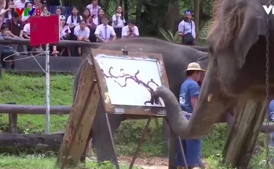 """""""Nghệ sỹ Voi"""" tại Chiang Mai, Thái Lan"""