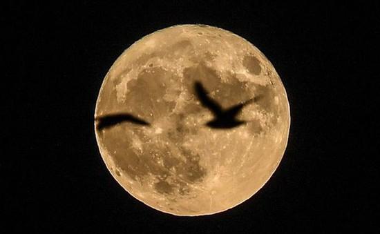 Siêu mặt trăng sẽ xuất hiện vào ngày 3/12