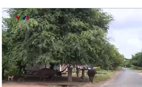 Đắk Lắk thiếu kinh phí phòng chống bệnh sốt rét