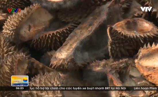 Khắc phục việc ủ vỏ sầu riêng gây ô nhiễm môi trường
