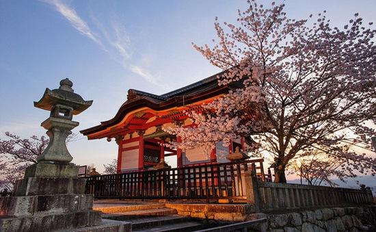 Vì sao du khách đổ xô đi du lịch Nhật Bản?