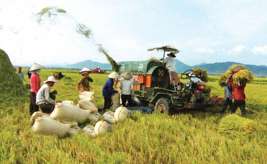 Quảng Trị huy động các nguồn lực đẩy mạnh phát triển nông nghiệp (17h25, 31/3, VTV1)