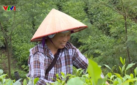 Tân Trào nỗ lực xây dựng nông thôn mới, thay đổi diện mạo vùng đất cách mạng