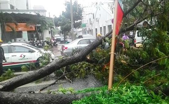 TP.HCM: Mưa lớn kéo dài khiến nhiều cây xanh ngã đổ