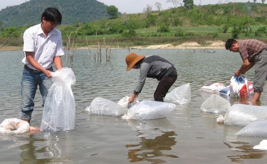 Thả con giống tái tạo nguồn lợi thủy sản