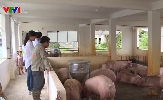 Thịt lợn an toàn, giá rẻ hút người tiêu dùng Vĩnh Phúc