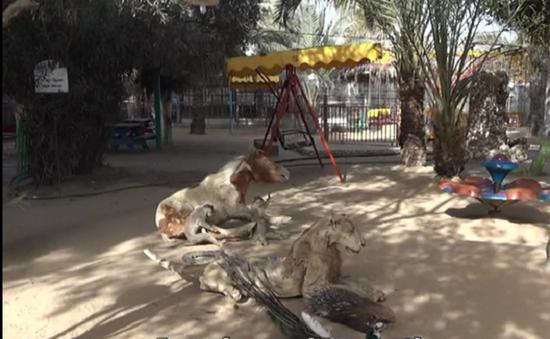 Thiếu tiền, sở thú duy nhất ở Dải Gaza đối mặt nguy cơ đóng cửa