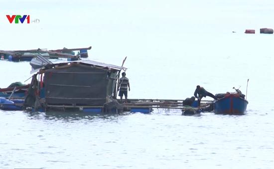 Người dân Phú Yên nỗ lực lặn tìm tôm hùm bị trôi dạt do bão số 12