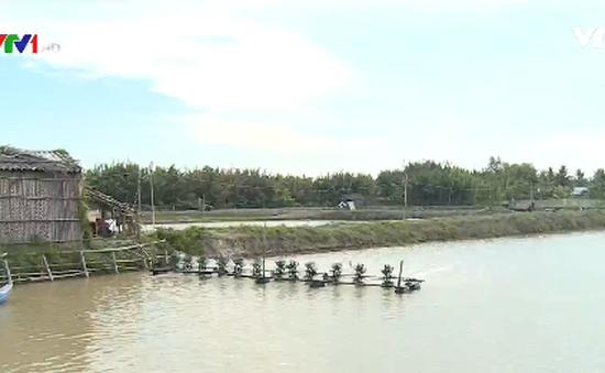 Nhiều người nuôi tôm tại Trà Vinh thiệt hại nặng