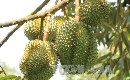 Giá trái cây Đồng bằng sông Cửu Long tăng cao