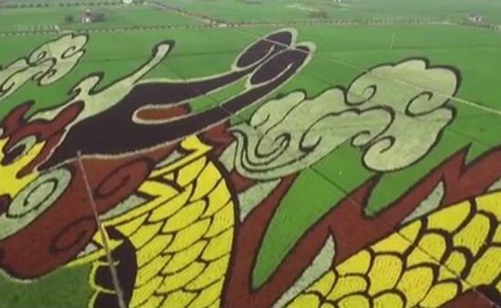 Trung Quốc: Tranh 3D lớn nhất thế giới trên đồng lúa