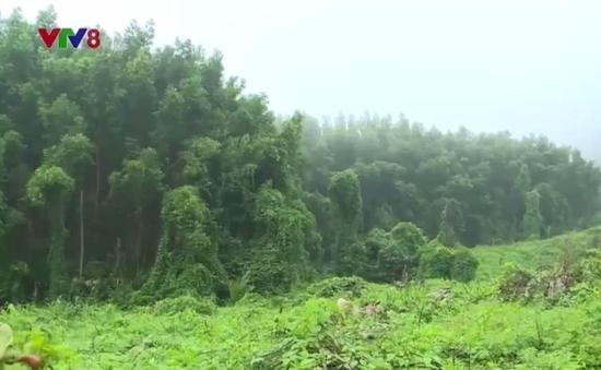 Khánh Hòa trồng rừng phục hồi chức năng Khu bảo tồn thiên nhiên Hòn Bà