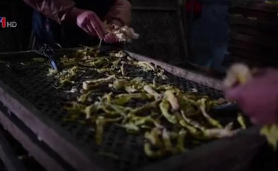 Mùa thu hoạch măng tre ở Trung Quốc