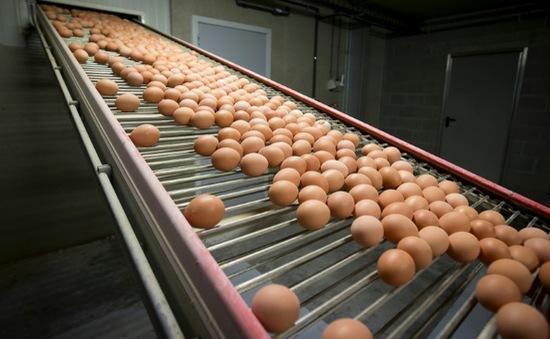 Hong Kong (Trung Quốc) cấm nhập khẩu thịt, trứng gia cầm từ Pháp