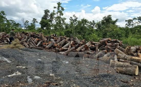 Đắk Nông khởi tối nguyên Giám đốc công ty lâm nghiệp để mất 75ha rừng