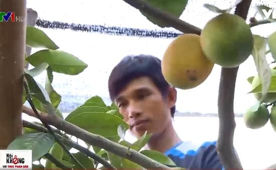Chanh vàng hữu cơ: Hướng đi mới của người nông dân