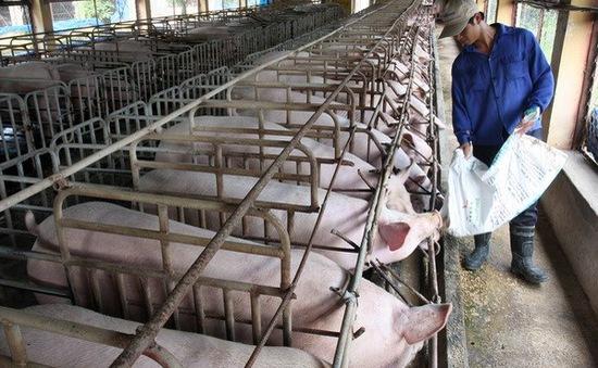 Mạnh tay loại bỏ kháng sinh kích thích sinh trưởng trong thức ăn chăn nuôi