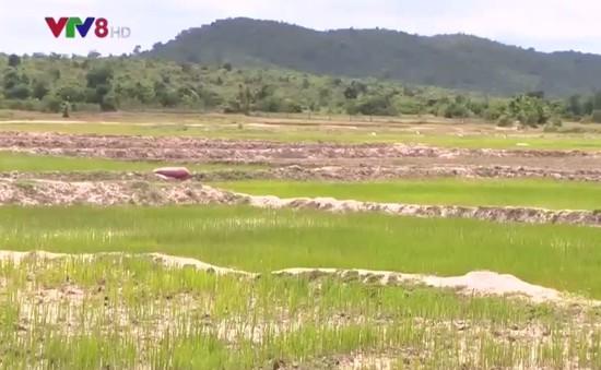 """Bất cập công trình thủy lợi ở """"vùng đất khát"""" Krông Pa"""