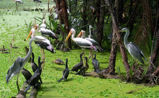 Du lịch khám phá thiên nhiên tại vườn chim Bạc Liêu