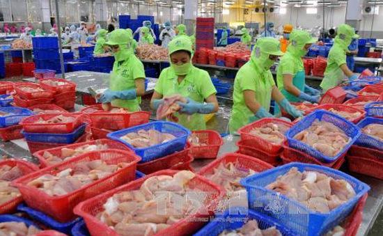Xuất khẩu cá tra có thể bị ảnh hưởng lớn trước thông tin sai lệch của truyền thông nước ngoài