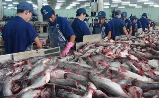 Xuất khẩu cá tra sang Hoa Kỳ giảm mạnh