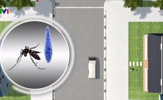 Alphabet phát triển công nghệ tiêu diệt muỗi mang virus Zika